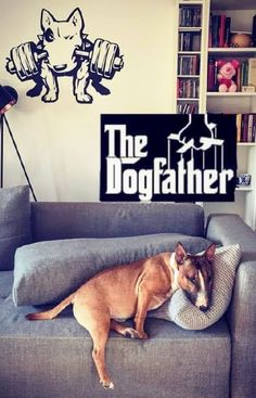 The Dog Father Bullie❤❤ Best Dog Breeds, Best Dogs, The Dog Father, Miniature Bull Terrier, Terrier Breeds, English Bull Terriers, Boxer Dogs, Pit Bulls, Bullies