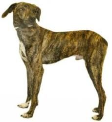 Otis is an adoptable Hound Dog in Inverness, FL.  Our small adoption fee includes: spay/neuter, vaccinations, microchip, worming, flea pill, blood test,  and free obedience training. LET US KNOW YOU...