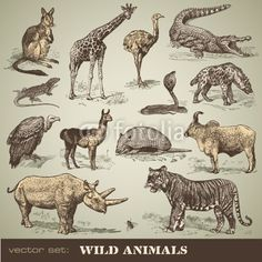 Vector: vector set: wild animals #vector #download #image #royalty #free #printable #scrap #scrapbook #scrapbooking #diy #paper #graphic #old #illustration #vintage #retro #antique #decorative #decor #decoration #page #book #design #ornament #ornate #woodcut #engraving #engraved #etching #print #element #ephemera #ancient