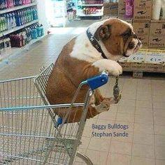 ♥ Baggy Bulldogs ♥                                                                                                                                                                                 More