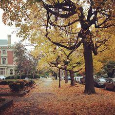 Fall in Louisville, Kentucky  Early Saturday Morning in Old Louisville -- S 3rd St.