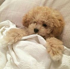 Image about cute in 𝓪𝓷𝓲𝓶𝓪𝓵𝓼 🐶 by ✿ jordi ✿ on We Heart It Animals And Pets, Funny Animals, Photo Chat, Cute Dogs And Puppies, Doggies, Cute Little Animals, Adorable Animals, Cute Creatures, Puppy Love
