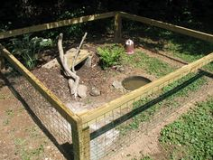 good plants for turtle pen - Google Search