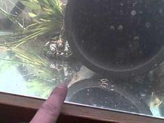 Tilapia Farming And Breeding Tank System