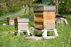 fabrication et plan de ruche dadant 10 cadres bee hives pinterest bee keeping bee and. Black Bedroom Furniture Sets. Home Design Ideas