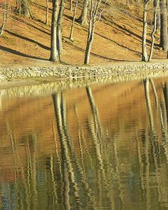 Walden Pond by Rosiecheeks