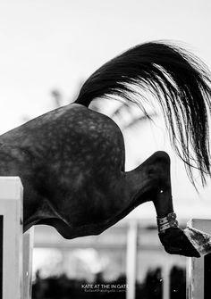 Photographed at the Winter Equestrian Festival Cute Horses, Pretty Horses, Beautiful Horses, Andalusian Horse, Friesian Horse, Arabian Horses, Wild Horses, Black Horses, American Paint Horse