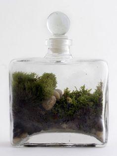 Create and Cultivate terarium