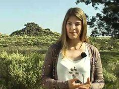 ▶ Escape na SIC Notícias: Entre Beja e o Parque Natural do Vale do Guadiana! - YouTube