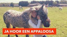 Ja hoor een Appaloosa   PaardenpraatTV