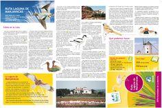Turismo Ornitológico para todos en los Humedales de Don Quijote.
