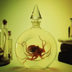 Preserved wet specimen octopus inside antique glass stoppered perrfume bottle. Available at ...
