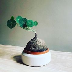 eb62c789559d1506d683045759b36434 House Plant Ze on house chemicals, house people, house stars, house vines, house candy, house gifts, house ferns, house design, house nature, house rodents, house decorations, house family, house slugs, house fire, house home, house cars, house flowers, house mites, house crafts, house plans,