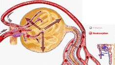 Are you concerned about renal function in patients with chronic kidney disease?_kidney healthy