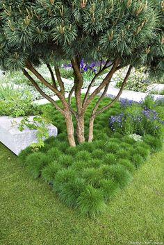 Les plantes à installer sous les arbres