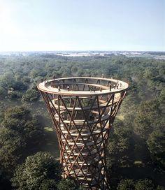treetop experience