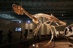 "Deltadromeus (meaning ""delta runner"") is a genus of large basal ceratosaurian theropod dinosaur from Northern Africa. It had long, unusually slender hind limbs for its size, suggesting that it was a swift runner. The skull is not known. Two fossil specimens of a single species (D. agilis, or ""agile delta runner"") have been described, found in the Bahariya Formation and Kem Kem Beds,"