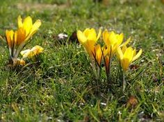 free photo of spring flowers - Google-søgning