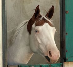 Medicine Hat is the name applied to horses exhibiting a unique and rare pattern of color. Being mostly white in body, Medicine Hats have color on their ears and top of the head, which resembles a bonnet or hat.
