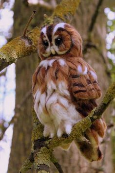 Beautiful felted owl
