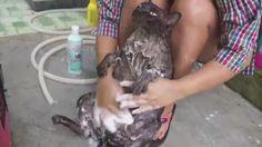 Favorite tweet by @iyasi_cat01 // されるがままにシャンプーされるデブ猫ちゃん  http://55.sasanov.net/1Ni17R9