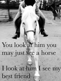 Horses are my everything ❤