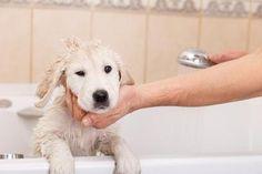 Cuidados, peluquería y los mejores profesionales para mimar a tu #mascota #Animales #perro #gato