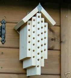Orchard Mason Bees ~ Valuable pollinators