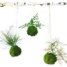 x Artisan Moss® Plant Painting®- No Care Green Moss Wall Art. Moss and Fern Art.