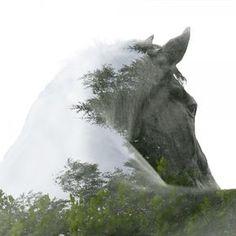 #Double exposure, #Horse, #Quarterhorse, #Blaze More