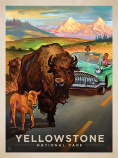 Yellowstone National Park: Bison Crossing - Anderson Design Group has created an…