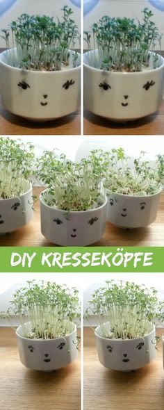 Cress heads as fast and easy DIY and upcycling, gift idea for the … - Crafts For Christmas Christmas Crafts For Adults, Upcycle, Diy Upcycling, Home Projects, Easy Diy, Planter Pots, Presents, Gifts, Cress Heads