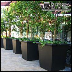 Tuscana Tapered Square Planter - fiberglass commercial planter - http://www.hooksandlattice.com/classic-tapered-square-planter.html