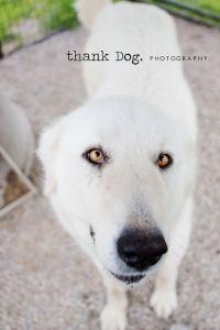 deigo | dallas dog photography » thank Dog. photography