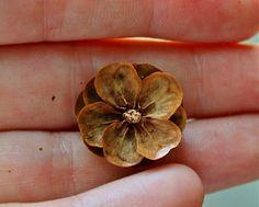make pine cone flowers