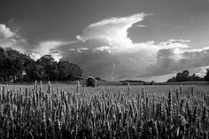 Late harvest ? , by Photograph Mark Cabot http://www.cabot.no