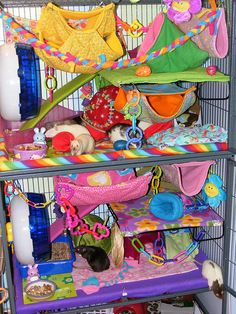"Looks pretty cozy!""a Midwest Ferret Nation cage - I know this one is for rats but Im thinking of doing something like this when I get Jinx's cage :)"" Hamsters, Baby Ferrets, Pet Rodents, Cute Ferrets, Pet Rats, Chinchillas, Chinchilla Cage, Ferret Cage, Hamster Cages"