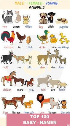 Baby Animal Names! What are the names of baby animals and their parents in English? Learn these young, male and female animal names with ESL pictures to increase your vocabulary words in English. Learning English For Kids, Kids English, English Tips, English Language Learning, English Study, Teaching English, English English, English Class, English Lessons For Kids