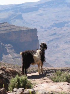 L'ANTI ATLAS Cheap Web Hosting, Mountains, Nature, Travel, Naturaleza, Viajes, Destinations, Traveling, Trips