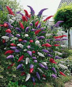 "This IS gorgeous!!! ""Beautiful Mixed Color Butterfly Bush"" By PictureGirl via pixdaus.com"