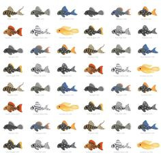 - white Duvet Cover by pikaole - Queen: x Tropical Freshwater Fish, Tropical Fish Aquarium, Freshwater Aquarium, Pleco Fish, Pig Breeds, Ocean Illustration, Betta Fish Types, Shark Art, Fish Drawings