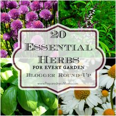While researching my Essential Herbs series I ran across many wonderful bloggers. I thought you'd like to meet them too | PreparednessMama