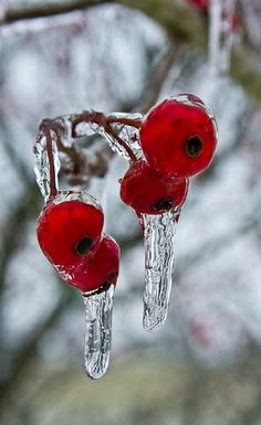 Red ice...