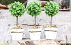 make mini topiaries for your wedding (or other parties)