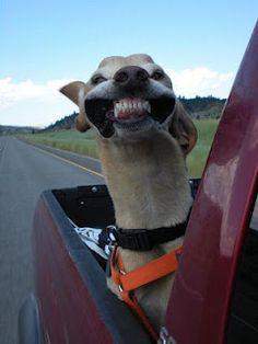 happy breezy pup!
