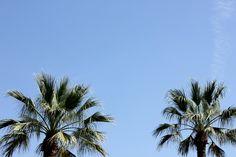 Palms in LA