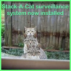 Stack-A-Cat surveillance system