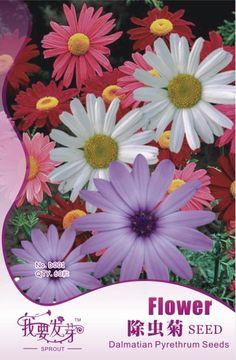 Flower seeds insect-flower seeds qu wencao cordyceps bonsai webcasts 60 four seasons  Original packaging Home Garden Bonsai #Affiliate