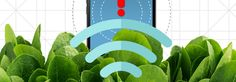 MIT researchers embedded spinach leaves with nanomaterials to produce bomb-sniffing salad greens that can even be connected with a mobile notification system.