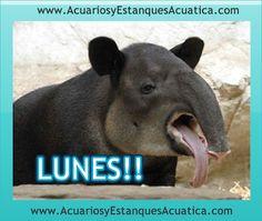 VAMOS CON EL LUNES! Feliz Semana para todos! http://acuariosyestanquesacuatica.com/ Acuatica acuarios y estanques: Google+